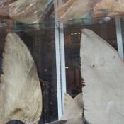 Las aletas de tiburón