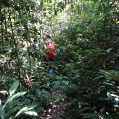 Durch Den Dschungel