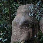 Ein Wilder Elefant Direkt An Der Strasse