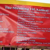 Bedeutung Der Freilassung Von Tieren