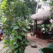 Rumah tetamu kami - oasis hijau di Sungai Mekong