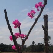 Blüten an einem trockenem Zweig