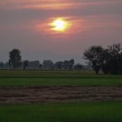 Sonnenuntergang über Den Reisfeldern