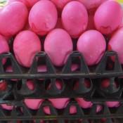 Pink Farbene Eier