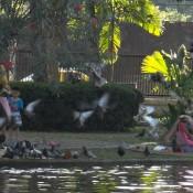 Im Nong Buak Hat Park