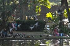 im Nong Buak Hat Park (Mit dem Fahrrad durch Chiang Mai)