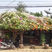 Blumendach