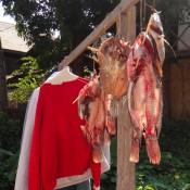 Wäsche Und Fische Zum Trocknen Aufgehängt