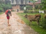 Seppel Als Kuh Flüsterer