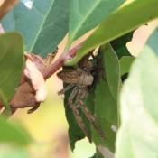 Eine Spinne Mit Ihren Spinnen Babys