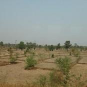 Trockene Reisfelder Auf Dem Weg Nach Pakse