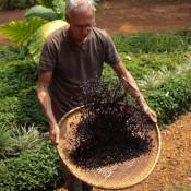 Mr. Koffie Beim Kühlen Der Bohnen Und Aussieben Der Schalen