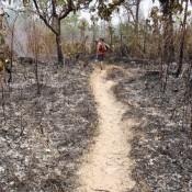Der Weg Durch Abgebrannten Wald …