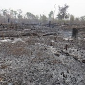 überall Abgebrannter Wald Und Dschungel