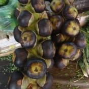 Palmenfrucht