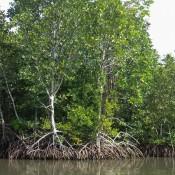 Durch Die Mangroven Zurück Zum Fishing Village