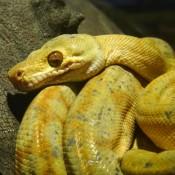 Im Snake House