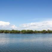 Mangroven Insel