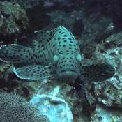 Schöne Unterwasserwelt