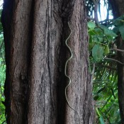 Eine Schlange Kriecht Am Baum Hoch
