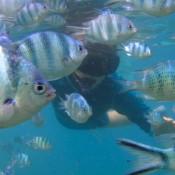 Nicole Im Fischschwarm