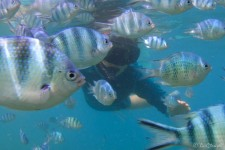 Nicole im Fischschwarm (Perhentian Islands)
