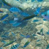 Im Fischschwarm