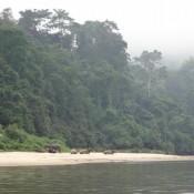 Mit Dem Boot Durch Den Regenwald