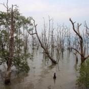 Das Ufer Des Nationalparks Bei Flut