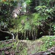 Dichter Dschungel Auf Dem Weg Zum Pako Beach