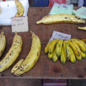 Bananen In Allen Grössen