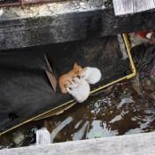 Katzen Unter Den Wasserhäusern
