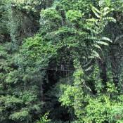 Claudius Im Dichten Dschungel