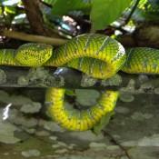 Eine Schöne Schlange