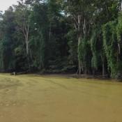 Ein Grüner Ölfilm Auf Dem Fluss – Verschmutzung Durch Die Ölplantagen
