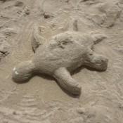 Eine Sandschildkröte