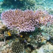 Wunderschöne Korallen Und Bunte Fische