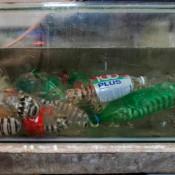 Fangschreckenkrebse In Plastikflaschen Im Aquarium