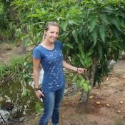 Auf Der Mango Farm