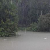 Regenwetter Im Botanischen Garten