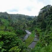 Wanderung Durch Die Reisfelder Entlang Des Ayung Flusses
