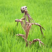 Vogelscheuche Im Reisfeld