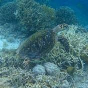 Turtle (mientras buceaba)