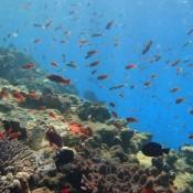 Schöne Unterwasserwelt (mientras buceaba)