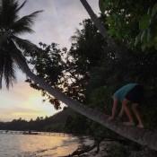 Seppel Geht Auf Die Palme