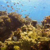 Unterwasserwelt Raja Ampat