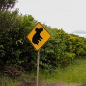 Vorsicht Koalas!