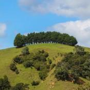 Grüne Hügellandschaften