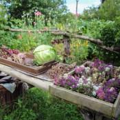 In Einem Hobbit Garten