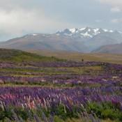 Blick Vom Mount John Auf Die Umliegenden Berge